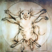Про Зверят, Народ, Крыс и Выборы